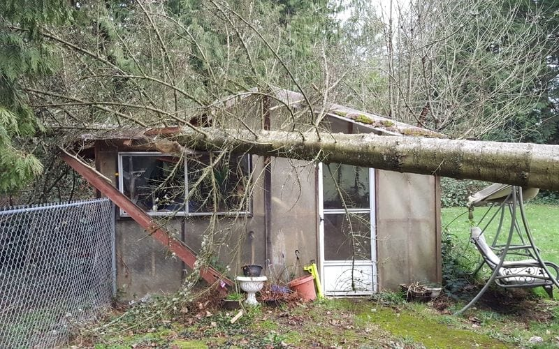 Storm Damage Pierce County